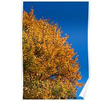 Yellow to Orange Poster