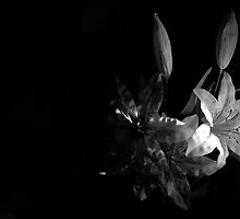 Rubber Tiger Lillies - Inspired by Imogen Cunningham by djlaw