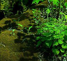 Moss & Miterwort by Susan R. Wacker