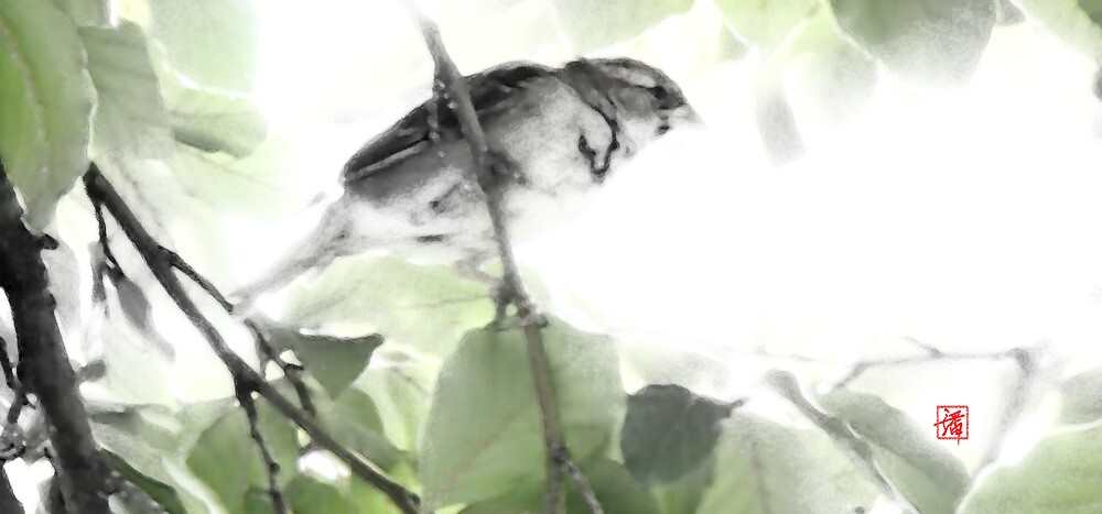 Watercolor bird by John Poon