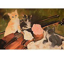gattini con violino Photographic Print