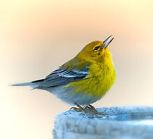 Warbler on a January Morning by Bonnie T.  Barry