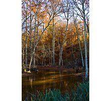 Autumn Swamp Photographic Print