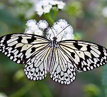 Paper kite by PhotosByHealy