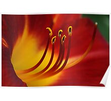 Red N Yellow Lily Poster
