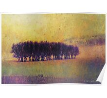 distant oak grove at cherry creek Poster