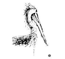 Pelican Photographic Print