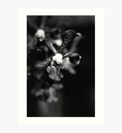 Orchid Essence  Art Print