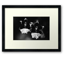 The Orchid Twins Framed Print