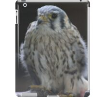 Baby Hawk iPad Case/Skin