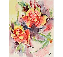 Roses Two Photographic Print