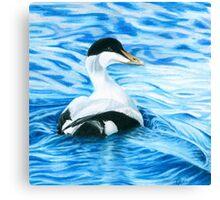 Eider Duck Canvas Print