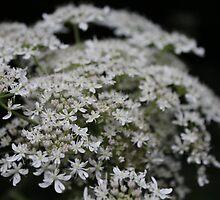 Macro Flower by durzarina