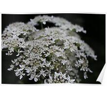 Macro Flower Poster
