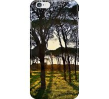 Umbrella pine trees in Strofylia forest iPhone Case/Skin