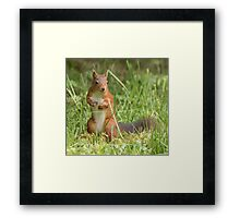 Squirrel in the grass Framed Print
