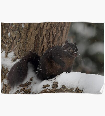 Just A Squirrel On A Tree  In The Snow Poster