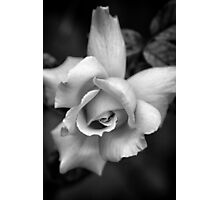 Black and White Rose Photographic Print
