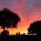 Sunset ~ Jan. 12, 2011, Davenport, FL by Debbie Robbins