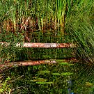 Reflections on the Fen (HDR) by Larry Trupp