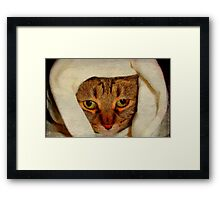 Baby it's cold outside!!! ©  Framed Print