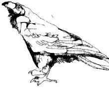 Scribbler-bird by Peter Simpson