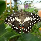 Beautiful Butterfly by Vicki Spindler (VHS Photography)