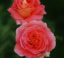 Twin Roses by Rodney55