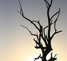 Lake Fyans - Tree Silhouette  2 by Luke Thomas