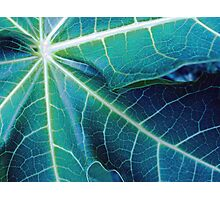 Blue Papaya Photographic Print