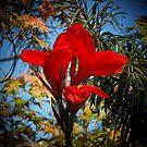 Red Velvet Flower Reaching by Crystal Fobare