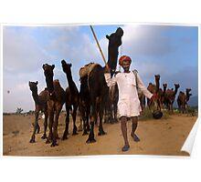 Camel Man. Pushkar Poster