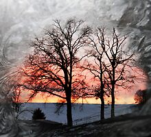 Winter see through by Michel Raj