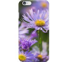 Michaelmas Daisies iPhone Case/Skin
