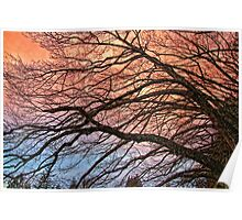 Red Sky Thicket #1 Poster