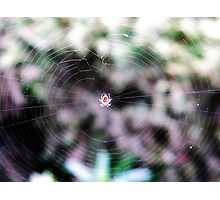 Master Of The Web Photographic Print