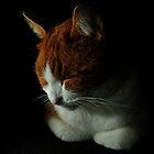 Fudge the cat by Patrick Bongers
