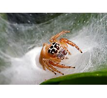 Jumping 'Shy' Spider Photographic Print