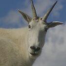 Mt. Goat sky by Daniel Doyle