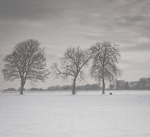 Lonely trees, Musselburgh, Scotland by Michael Marten
