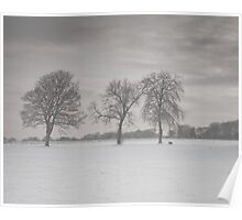 Lonely trees, Musselburgh, Scotland Poster