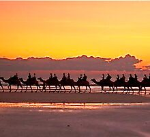 Camels at Sunset by Penny Smith