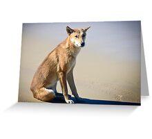 Beach Solitude (Dingo) Greeting Card