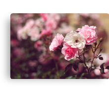 Pink Rose Flowers Photograph Canvas Print