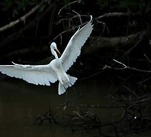 preparing to land by kathy s gillentine