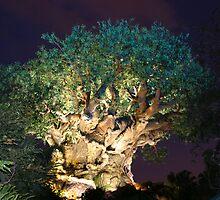 WDW Animal Kingdom Tree of Life by chewi