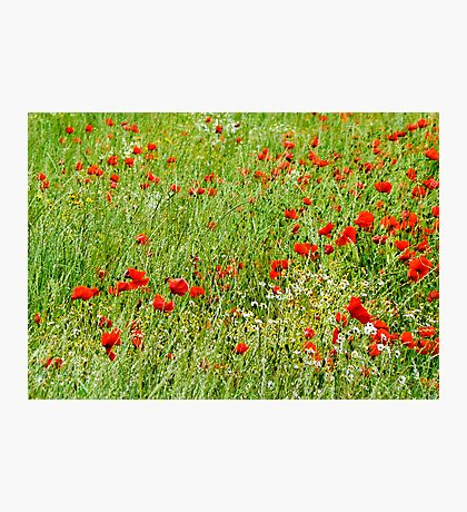Poppy Field Photographic Print