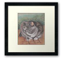 Precious Cat Framed Print