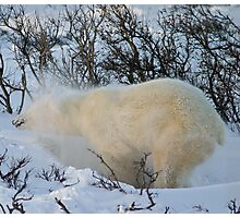 Yoga Bear shake snow Photographic Print