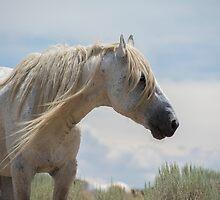 Desert's old Man  by Nicole  Markmann Nelson